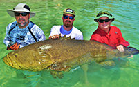 Three men with very large Goliath Grouper.