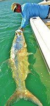 Capt. Jesse with large tarpon.