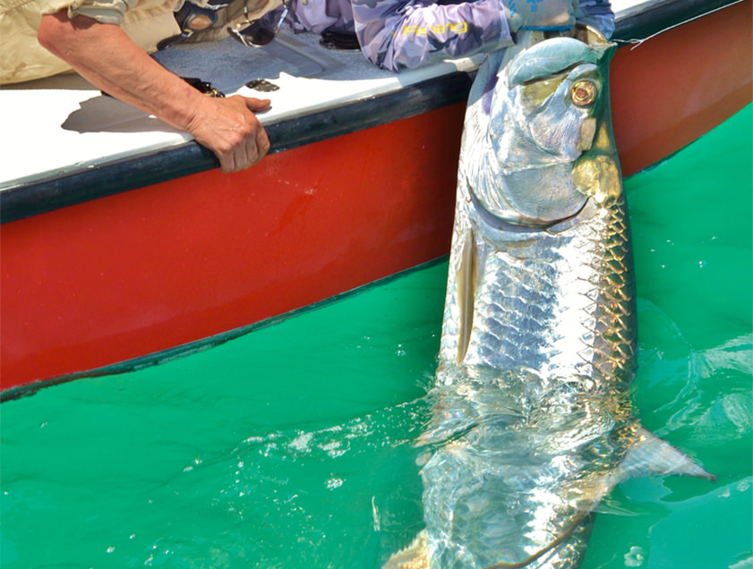 Boca Grande and Englewood tarpon fishing charter photos.