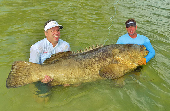 Boca Grande and Englewood goliath grouper fishing charter photos.