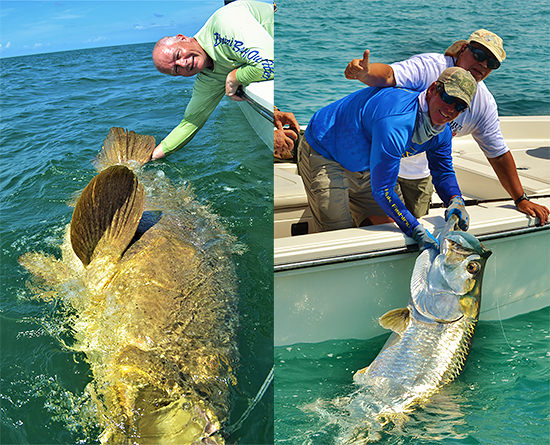 Huge Goliath Grouper and tarpon caught off Boca Grande, FL on a charter fishing trip.