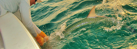 Capt. Jesse with Florida Inshore Xtream Fishing Charters, landing a large tarpon.