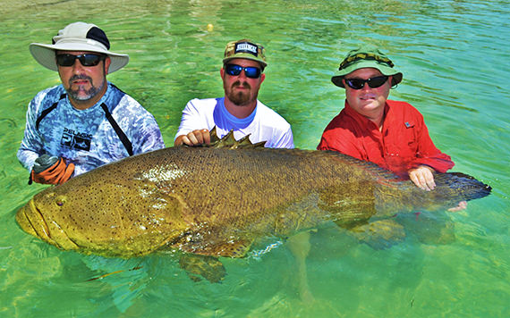 Goliath Grouper caught off Boca Grande with Florida Inshore Xtream fishing charters.