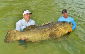 Boca Grande goliath grouper
