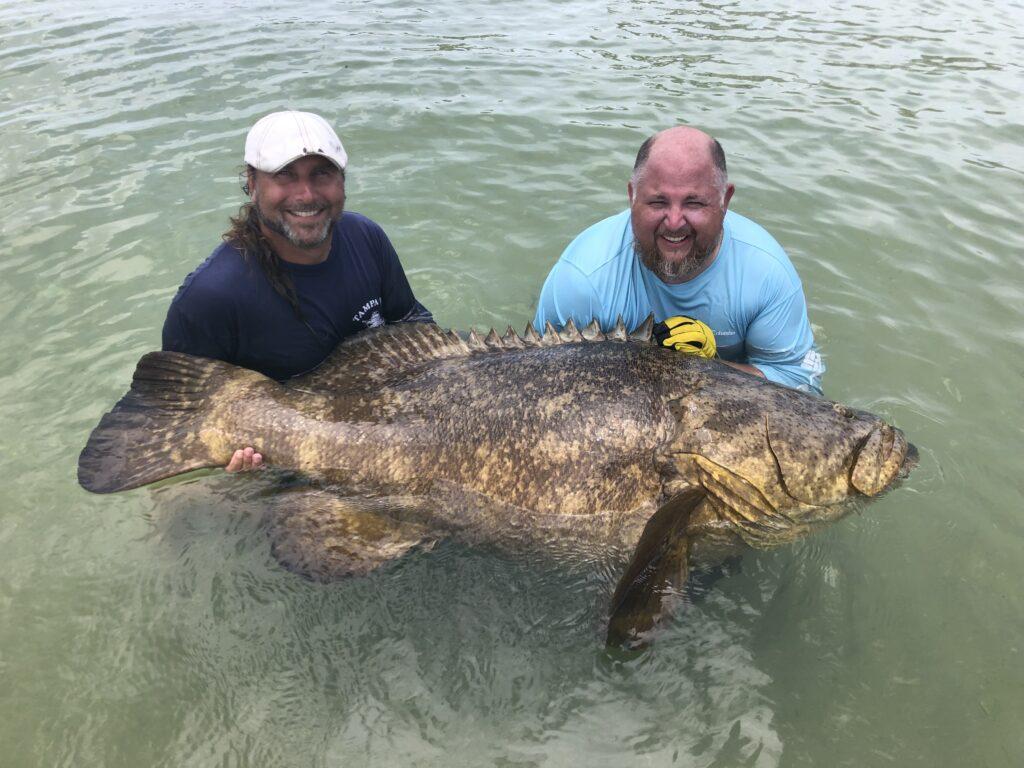 Boca Grande goliath grouper fishing